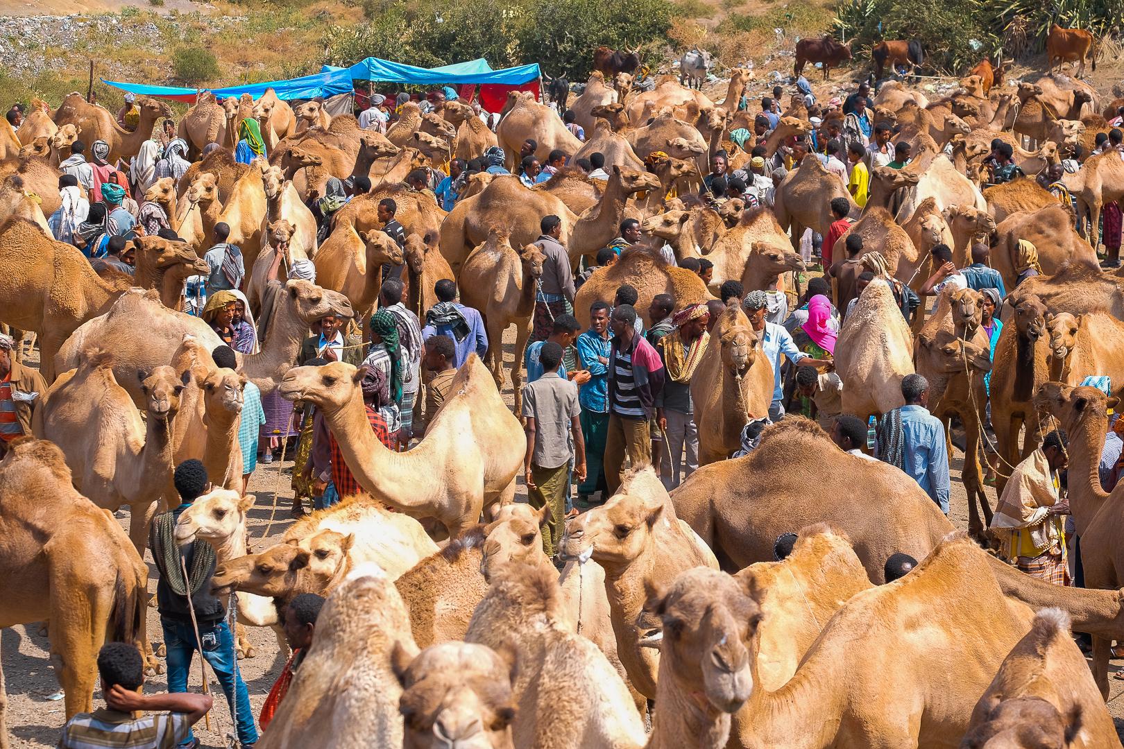 busy day at Bati market, Ethiopia
